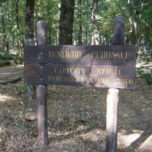 Sentiero pedonale Foresta Umbra